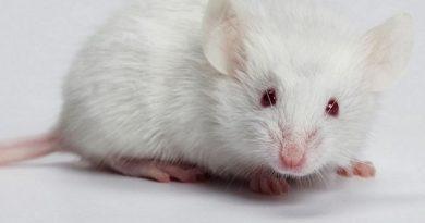 Nằm mơ thấy chuột đánh con gì chắc ăn nhất?