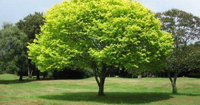 Chiêm bao thấy cái cây là điềm báo hên hay xui ?