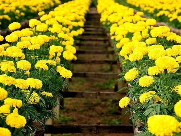 Mơ thấy hoa màu vàng là điềm báo điều gì?