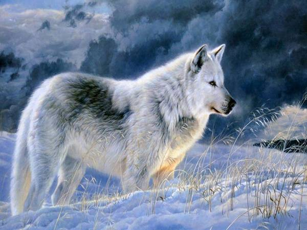 Mơ thấy chó sói đánh con gì? Là hung hay là cát