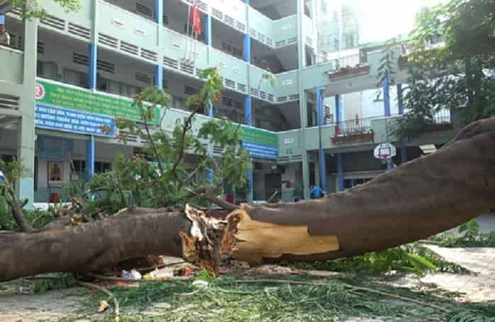Ý nghĩa mơ thấy chặt cây điềm báo gì đánh số gì?